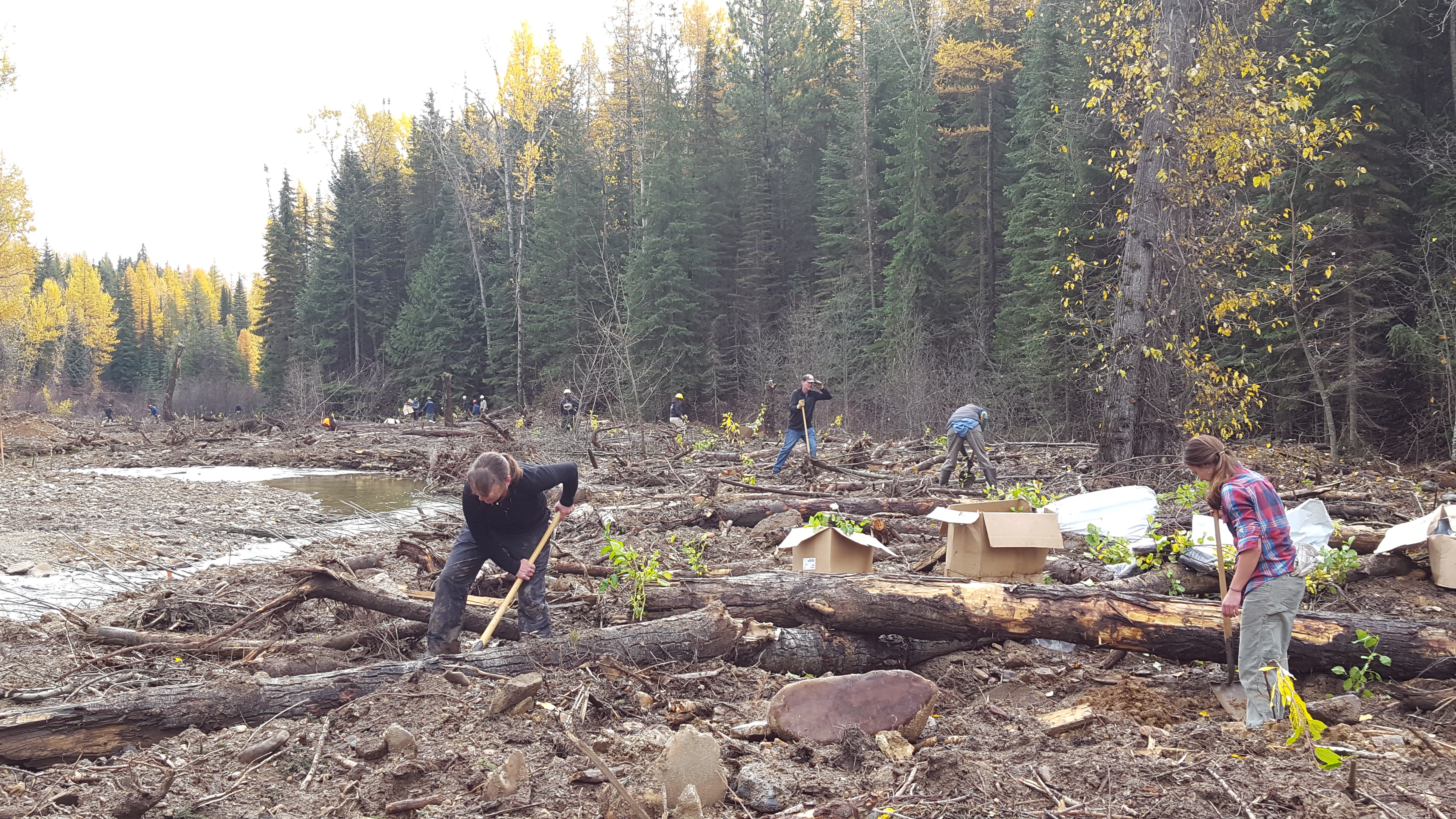 Volunteers plant native vegetation along Ninemile Creek